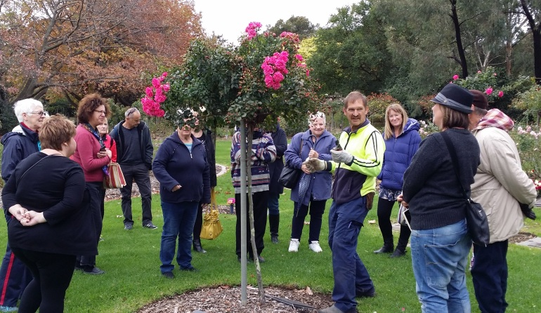 Rolfe Stock, SMCT's Head Rosarian gives a rose pruning demonstration