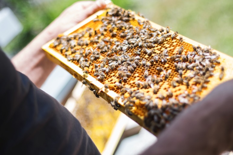 bees-2368228_1920
